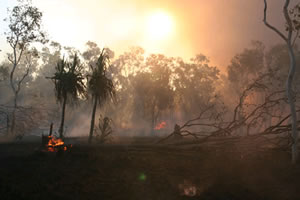 Bush fire, Senegal